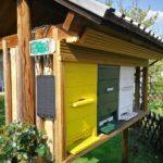 Bienenstock - die grundlagen kennen
